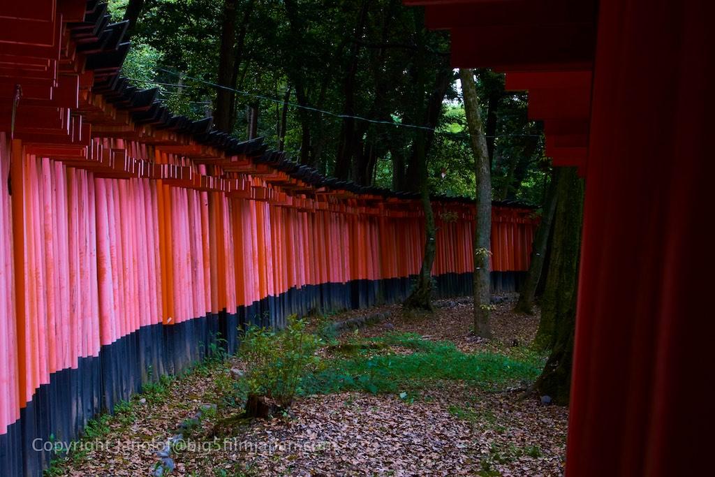 Kyoto 377 (1)